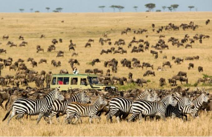Highlights of Tanzania Safari  tour