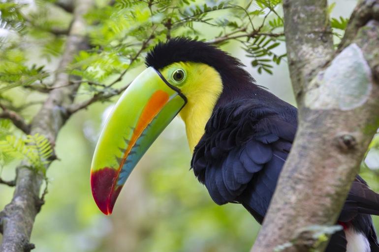 Ultimate Costa Rica Hiking Adventure tour