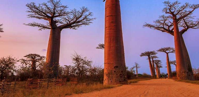 Madagascar Baobabs & Beyond tour