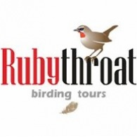Rubythroat Birding Tours