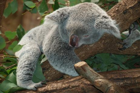 Australia Beachside Wildlife Adventure tour