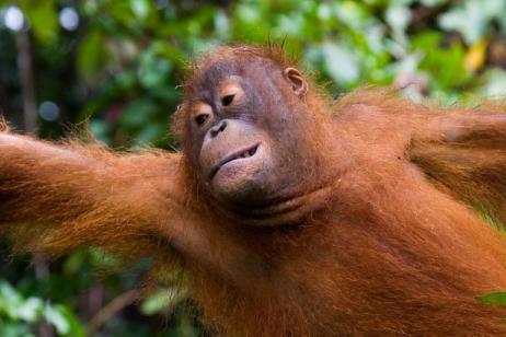 Borneo Family Holiday tour