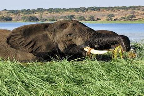 Jewels of Africa with Lake Nakuru National Park Area & Chobe National Park Area tour