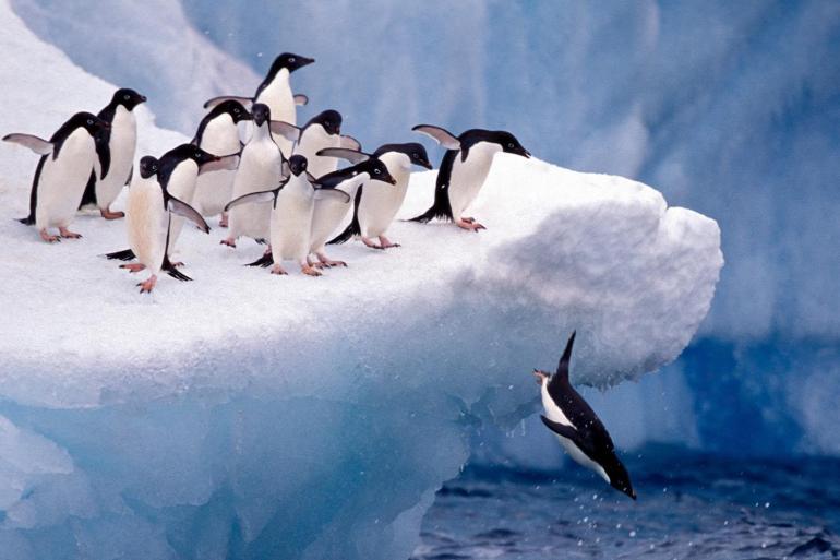 Crossing the Antarctic Circle tour