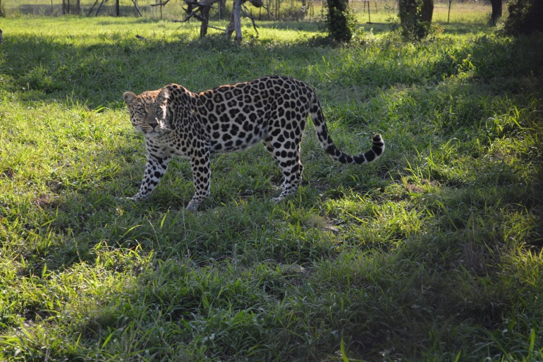 Safari Bird watching South Africa – Wildlife Conservation Experience package