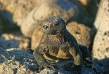 Best 10 Tours to the Galapagos on a Budget