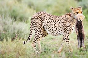 South West Safari 19 Day tour