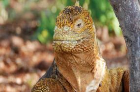Galapagos Santa Cruz and around tour
