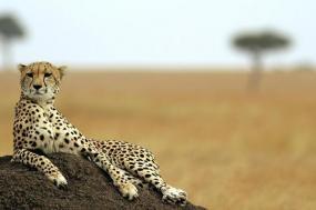 Best Of Kenya Safari tour