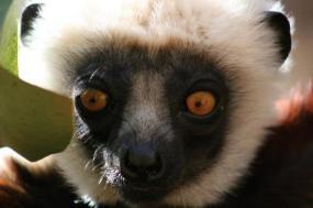 Culture & Wildlife of Madagascar tour