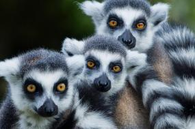 Classic - Lemurs, National Parks, and Beaches tour