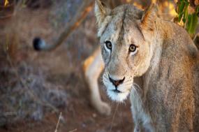 Mozambique, Kruger & Swazi Discoverer tour