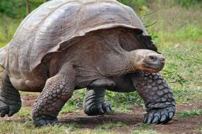 Classic Galapagos - Southern Islands (Grand Queen Beatriz) tour