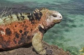 Galapagos Encounter - Southern Islands  (Grand Queen Beatriz) tour