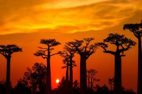 Madagascar - Baobab & Tsingy Explorer tour