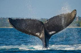 Rainforests and Whales to Île Sainte-Marie tour