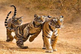 Essence of India with Ranthambore (Luxury Gold - Summer 2017) tour