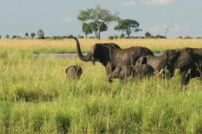Chobe Experience - Independent tour