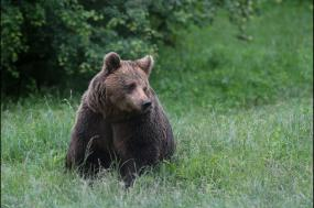 Bulgaria: Realm of the Brown bear tour