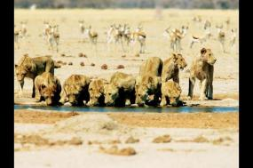 Family Okavango Adventure tour