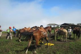 6-Day Galapagos Adventure Tour: Santa Cruz - Isabela tour