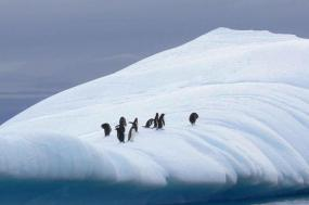 Antarctic Explorer from Ushuaia 11 day tour