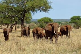 Tanzania & Kenya Flying Safari tour