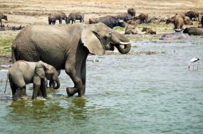 6 Days Gorilla and Wildlife Safari tour