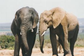 Malawi, Zambia & Zimbabwe  tour