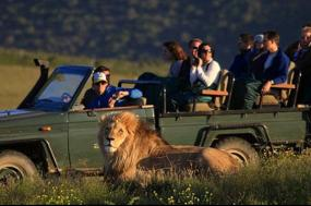 Wildlife + Safari tour
