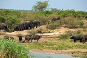 6 Days Chimpanzee Trekking and Wildlife Safari tour