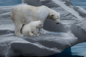 Introduction to Spitsbergen - Polar Bear Safari tour