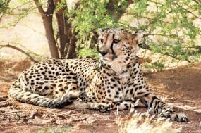 Namibia Wildlife Safari tour