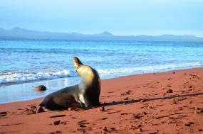 Darwin's Galápagos: Ecuador tour