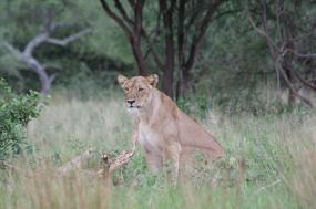 Tanzania: Migration Seeker Safari tour