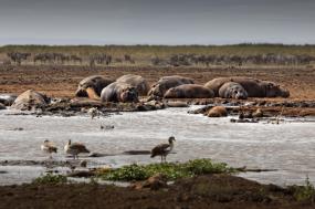Beauty and the Beast - Adventure Tanzania Safari tour