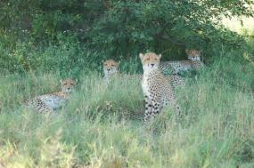 Botswana Wildlife Breakaway Safari tour