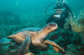 Dive Galapagos  tour