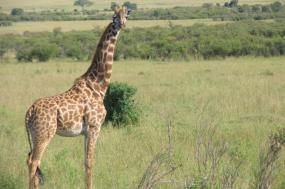 Ultimate Kenyan getaway