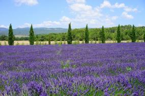 Provence Tour - 8 Days