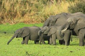 Photographic Luxury Safaris In Northern Tanzania-12 Days tour