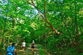 Costa Rica - Rainforest Adventure tour