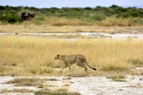 7-Day Romantic & Stylish Germ of Serengeti tour
