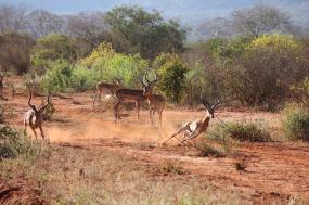 Great Rift Valley Safari tour
