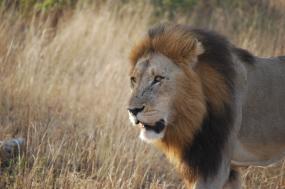 8 Days Kenya Masai Mara Group Safari