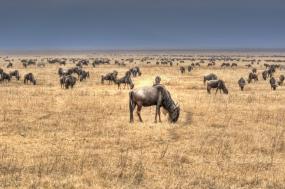 Short Budget Safari  tour