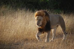 7 Days Bwindi Gorillas and Savannah Wildlife Safari