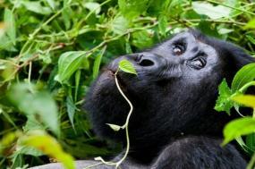 Uganda Unbound tour