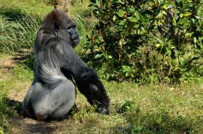 6 Days Gorillas, Chimps and Wildlife Tour
