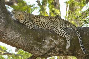 Botswana Adventure & Victoria Falls tour